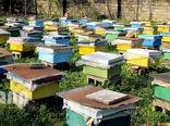 آغاز برداشت عسل از زنبورسـتانهای سیروان