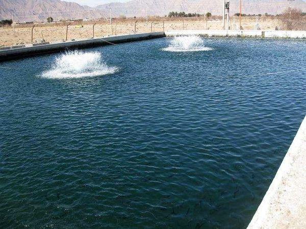 پیش بینی تولید 100تن ماهی در استخرهای دو منظوره کشاورزی استان چهارمحال و بختیاری