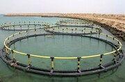 آبهای شور ظرفیتی برای پرورش تیلاپیا