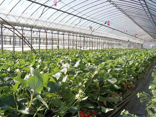 توسعه کشتهای گلخانهای در شهرستان خانمیرزا