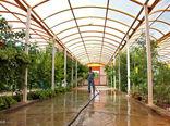 90درصد گلخانه های شهرستان نرماشیر هیدروپونیک است