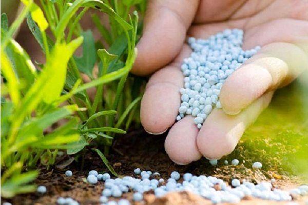 توزیع بیش از ۳ هزار تن انواع کودهای شیمیایی بین کشاورزان شیروانی