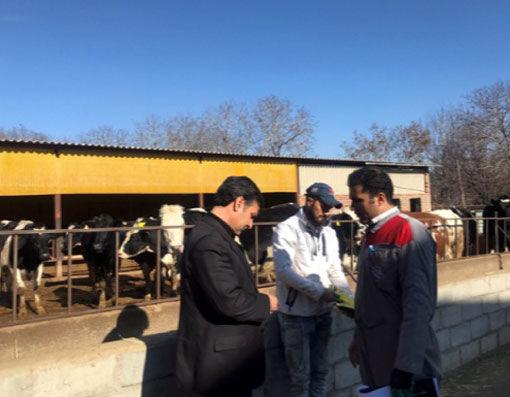 پلاککوبی حدود 10هزار راس دام در شهرستان مراغه