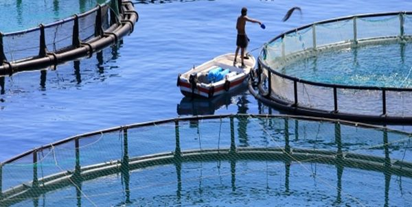 7 هزار تن انواع آبزیان از کردستان صادر شد