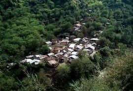 راه نجات جنگلها تعامل دوستانه با روستاییان است