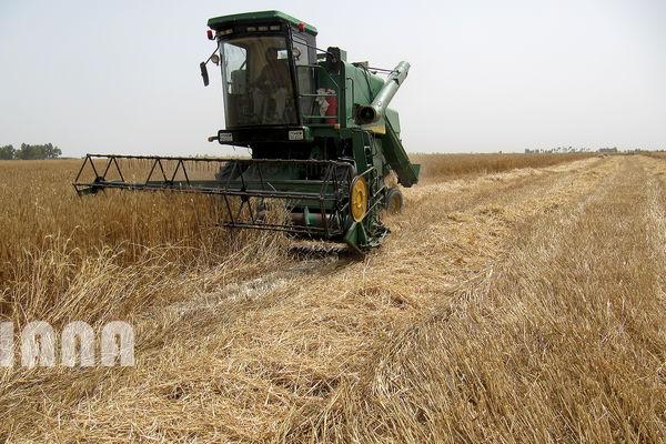 گندمکاران طلبکار خوزستانی یک ماه دیگر صبر کنند