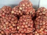پرداخت 92 درصد از مطالبات کشاورزان پیازکار