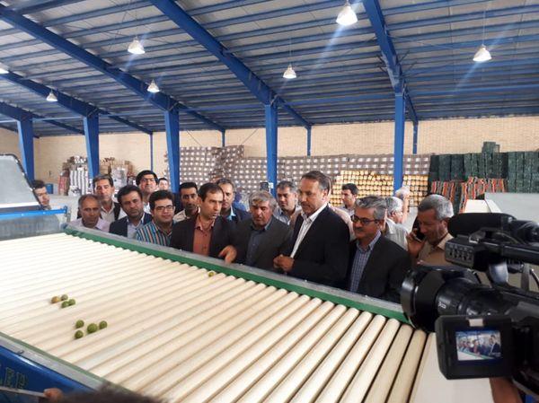 افتتاح سورتینگ مرکبات در شهرستان جهرم