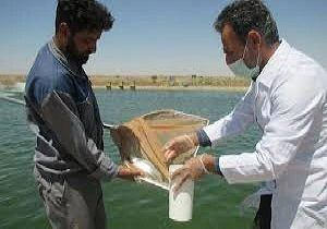اجرای طرح پایش باقیماندهها در مراکز پرورش ماهی کردستان