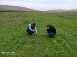 کشت بیش از ۳۰ هکتار کینوا در  مزارع استان آذربایجان شرقی