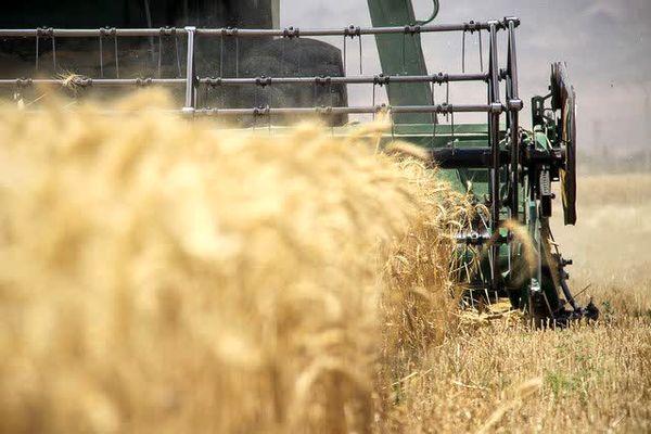 پیشبینی برداشت 8هزار تن گندم ازمزارع شهرستان اردل