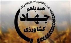 برگزاری کارگاه آموزشی هرس درختان پسته در بخش مرکزی شهرستان کرمان
