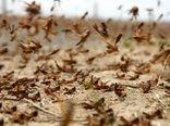 مبارزه با ملخ صحرایی در سطح 183 هزار هکتار از اراضی انجام شد