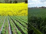 همکاری ایران و آلمان در زمینه بذر کلزا و چغندرقند