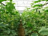 امسال 50 هکتار گلخانه و سایبان در  استان قزوین احداث میشود