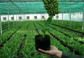 طرح یاوران تولید باهدف رونق بخش کشاورزی اجرا میشود