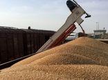 خرید تضمینی گندم در کردستان پایان یافت