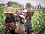 فعالیت زنان روستایی شهرستان عسلویه در عرصه تولید بیشتر میشود