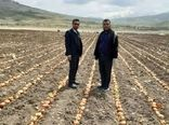 آغاز  کشت پیاز بذری در شهرستان کوهرنگ استان چهارمحال و بختیاری