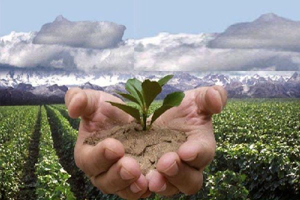 اثربخشی پروژه های تولیدات گیاهی با الگو سازی مناسب و صحیح ممکن می شود