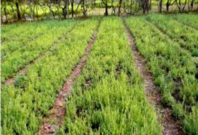 پوشش گیاهی مقدار قابل توجهی از رواناب را در خراسان شمالی کنترل کرد