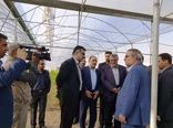 بازدید وزیر جهاد کشاورزی از گلخانه سبزی و صیفی در سپیدان