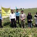 اولین پروانه ICM برای خربزه در شهرستان کوار صادر شد