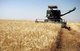 برداشت محصول گندم از مزارع ارسنجان آغاز شد
