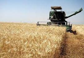 85 درصد گندم دیم کشور مکانیزه کشت می شود