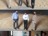 بازدیدهای روزانه از مراکز خرید تضمینی گندم در استان انجام می شود