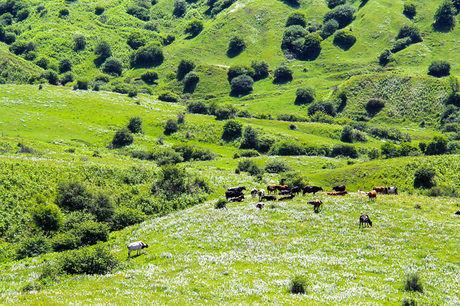 عرصههای طبیعی خراسان شمالی برای مبارزه با آفات پایش میشود
