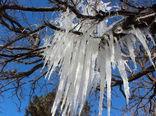 سرما یک هزار و ۹ میلیارد ریال به بخش کشاورزی خراسان شمالی خسارت زد