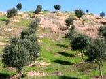 توسعه باغ دیم و گیاهان دارویی در اراضی شیبدار 12 استان