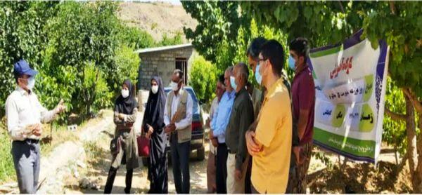 روز مزرعه مدیریت گل جالیز در شهرستان سامان برگزار شد