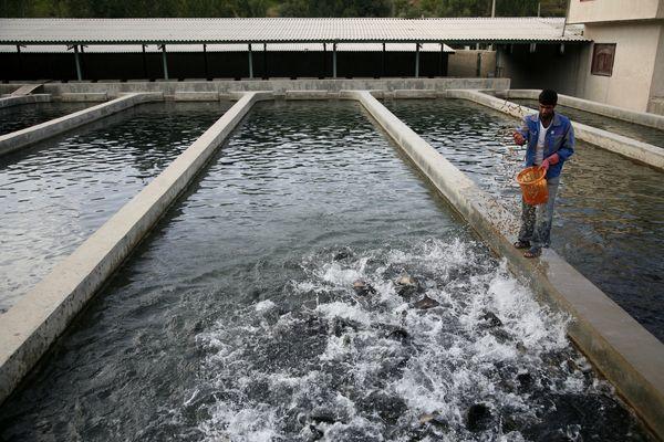 افتتاح 16استخر پرورش ماهی در سیستان