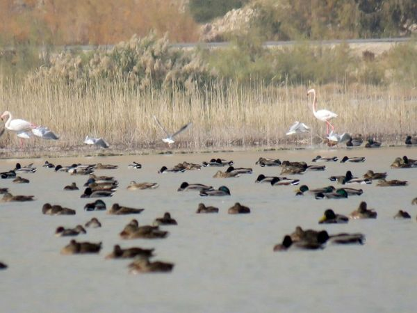 آمادهسازی تالاب هیرم برای مهاجرت پرندگان