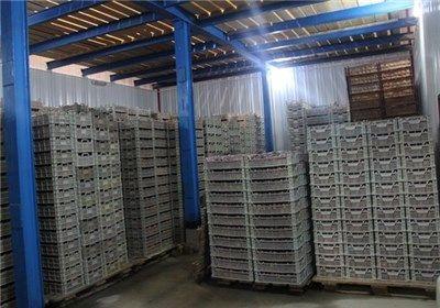 صدور مجوز 51 واحد سردخانه محصولات کشاورزی در استان لرستان