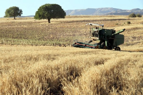 کردستان در سکوی نخست کشت مکانیزه دیم قرار گرفت