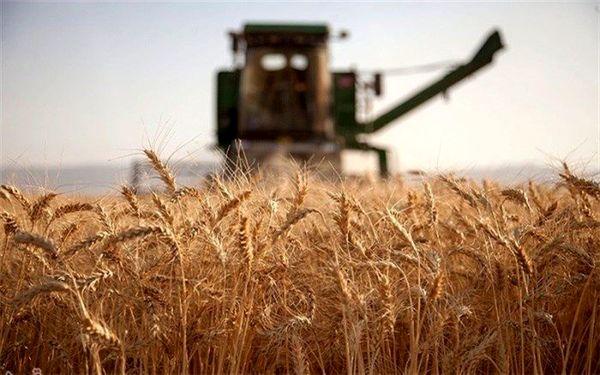 خرید گندم مازاد بر نیاز کشاورزان از ۷.۱ میلیون تن فراتر رفت