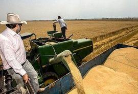 برداشت گندم از حدود 12هزار هکتار از مزارع ری آغاز شد