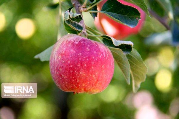 معرفی باغدار نمونه محصول سالم در کردستان