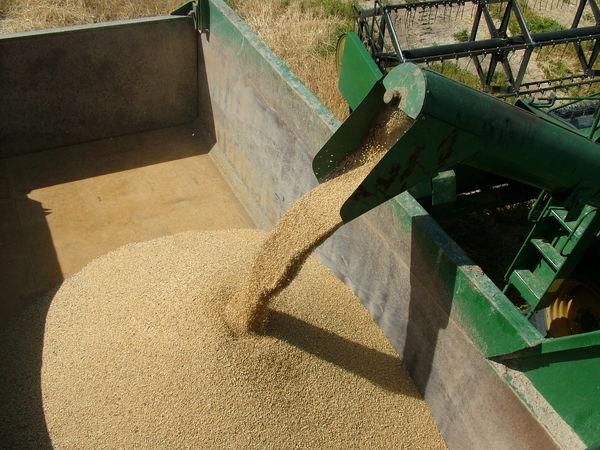 100تن گندم مازاد بر نیاز کشاورزان سیستان و بلوچستان خریداری شد