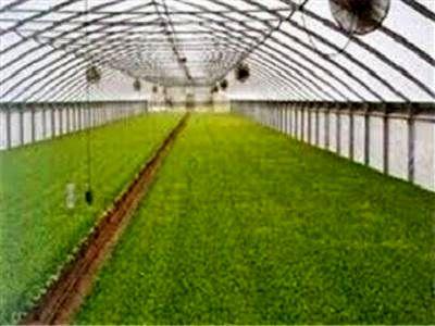 سطح زیر کشت گلخانه ها در مرودشت رو به افزایش است