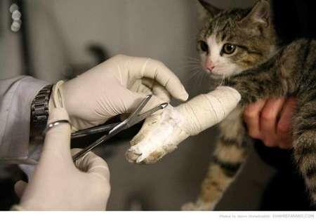 تنها 5 درصد حیوانات خانگی لوکس هستند/ بیشتر دامپزشکان دو شغل دارند