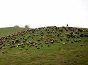 پایش 15 سامانه مراتع قشلاقی با مساحت 100هزار هکتار در شهرستانمیامی