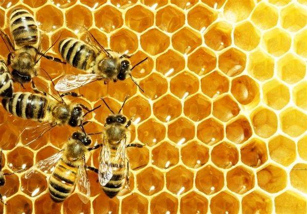 افزایش ۳۰ درصدی تولید عسل در شهرستان ملایر