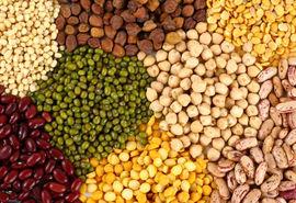 صادرات ۱۷ کالای خوراکی از اول دیماه ممنوع شد