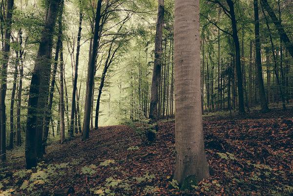 اجرای طرح کاداستر در ۱۱ میلیون هکتار از جنگلهای کشور