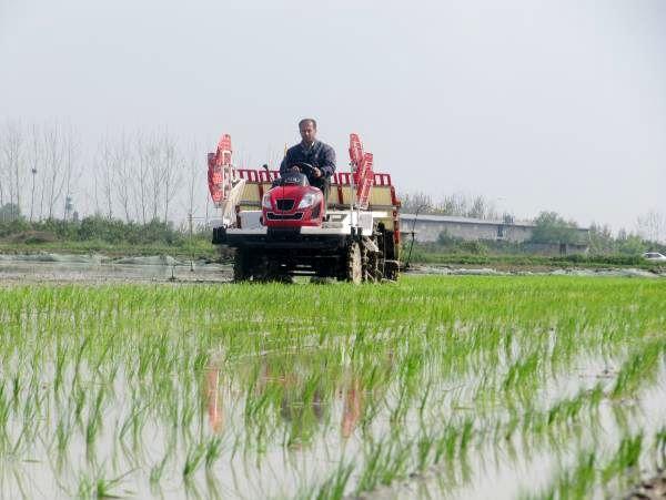 پیشبینی تولید 2 میلیون و 220 هزار تن برنج در سالجاری