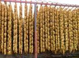 کارگاه فرآوری انگور در ایلام ایجاد میشود